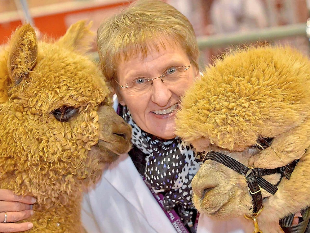 Adorable alpacas win over visitors at Telford show - with video and pictures