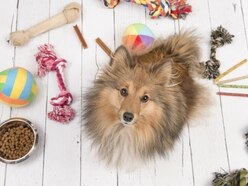 Pampered pets gift guide - tried and tested