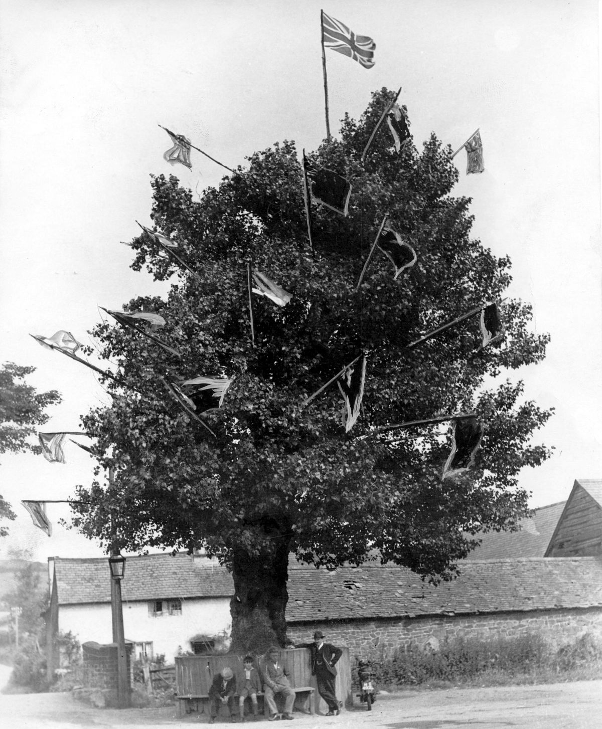 The original tree in May 1937.