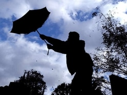 Trees down as 40mph gusts hit Shropshire