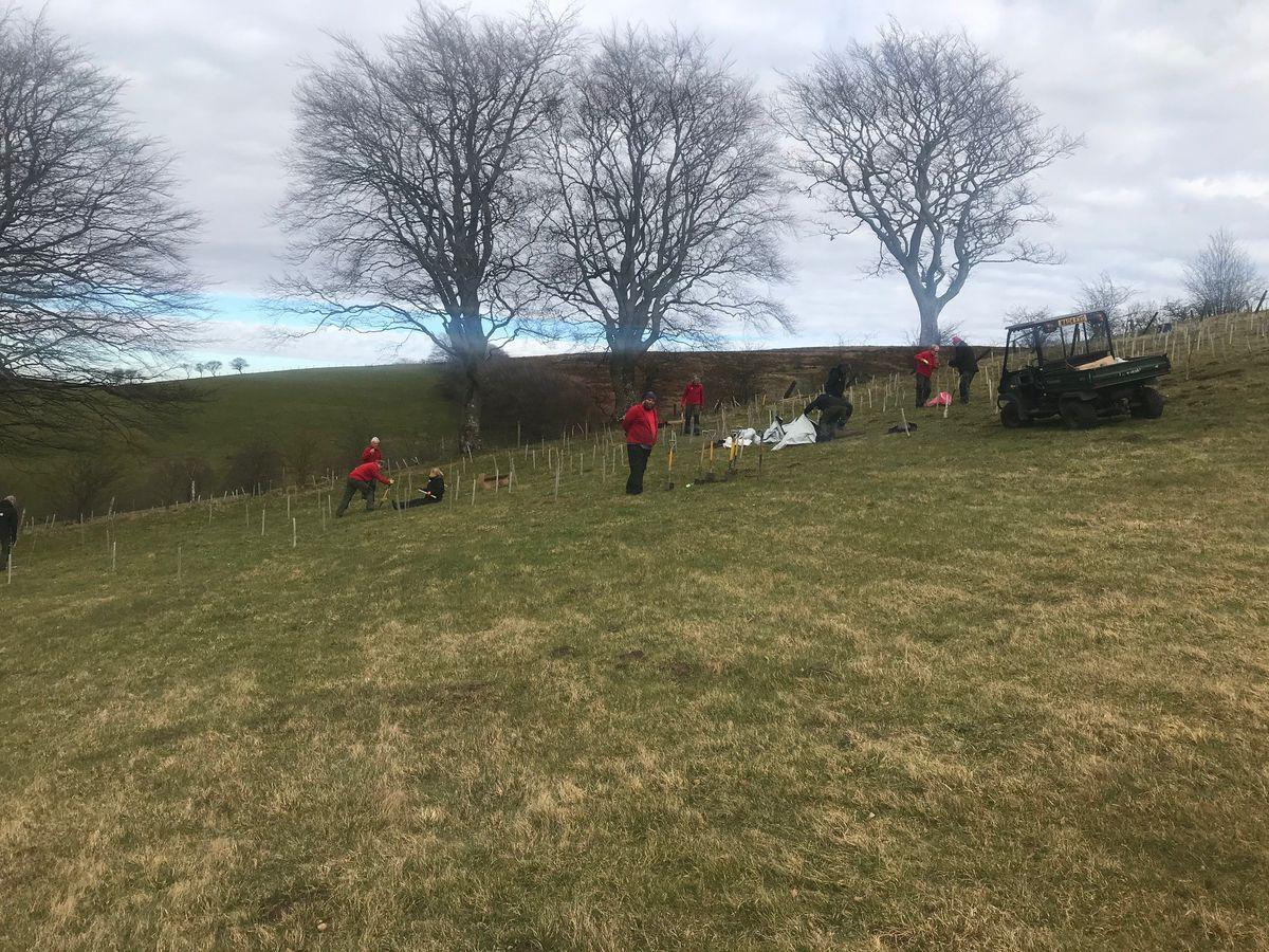Belmore Farm tree planting