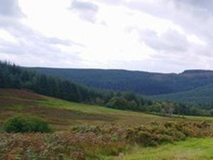 The Dyfnant forest