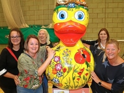 Not so quackers! Delight after Telford's giant ducks raise £30,000 for charity