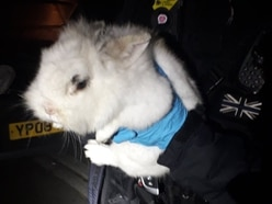 Rabbit found as police search car for drugs in Shrewsbury