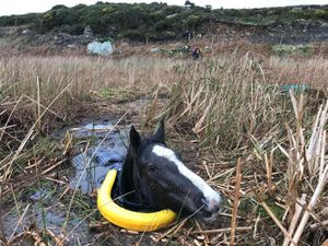 Horse recovering after getting trapped up to neck in deep swamp