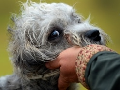 Pooches on parade at dog show and fun day