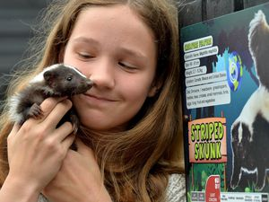 Baby skunk Tia held by Em Barton, 12, on the Exotic Zoo's opening day at Telford Town Park