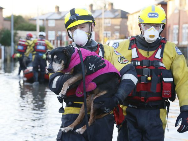 The RSPCA launches rescue missions for animals stuck in floods