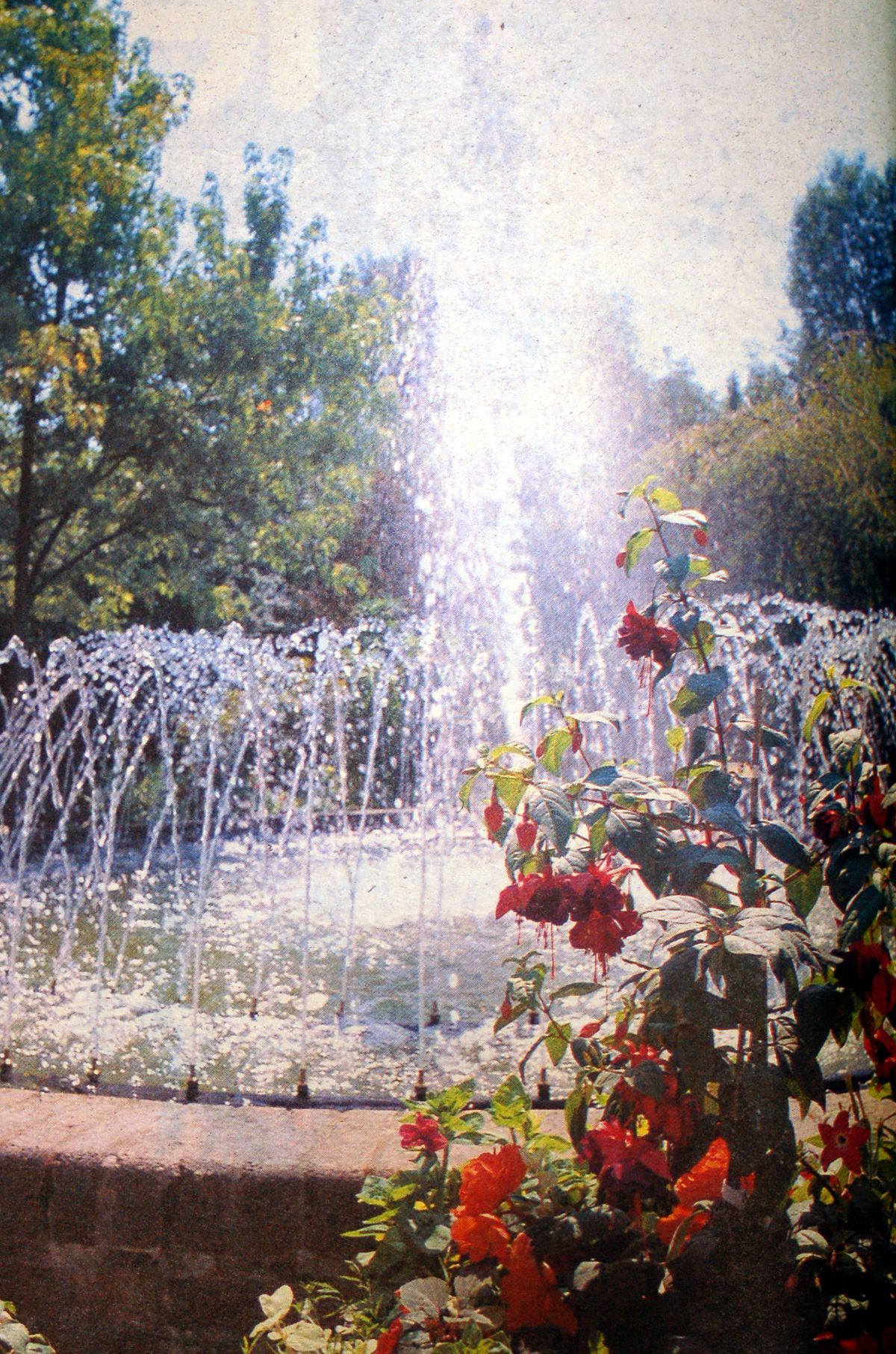 The magnificent Chelsea Gardens in Telford town park were one of the features which helped the town to a Britain in Bloom win.
