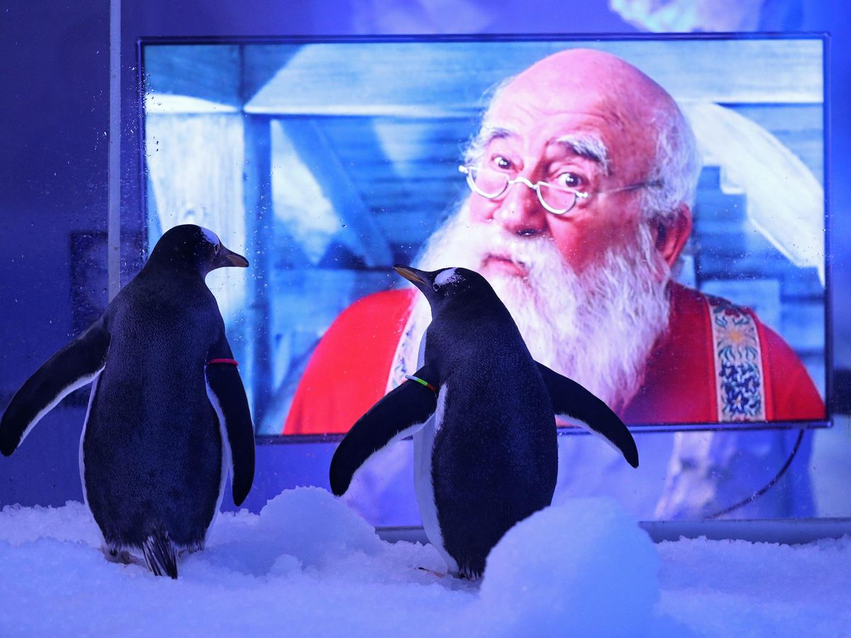 Penguins watching Christmas movies