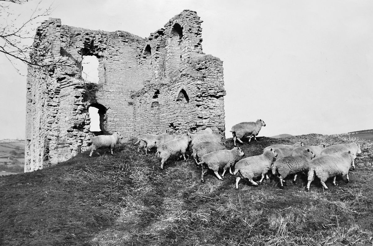 Sheep may safely graze at Clun Castle, seen here in March 1967, but historically this borderland area was a turbulent place and living in the refuge of a castle wasn't a bad idea. There are other hazards apart from scraps between the English and the Welsh – it isn't so long ago that the ruins were damaged by an earthquake.