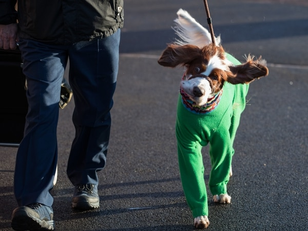 Crufts 2020: Top barking mad facts about the Birmingham event