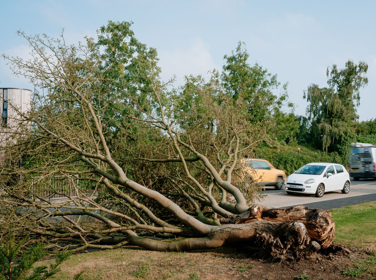 A fallen tree next to Wellington Road in Newport on Thursday morning