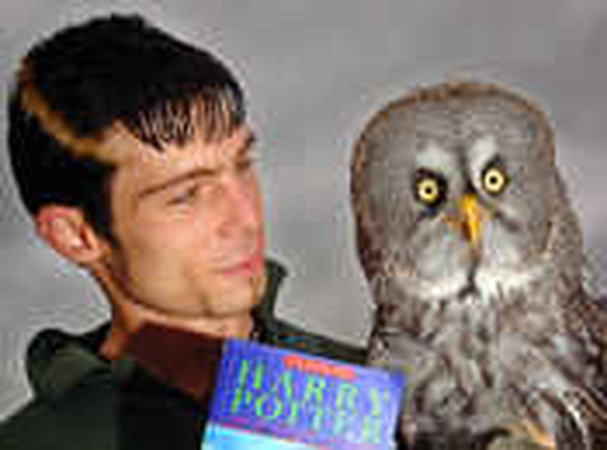 Harry Potter owl retires to farm