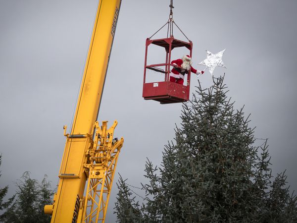 Santa Claus uses a crane to place the star on top of the Christmas tree, one of the largest in Scotland, at Blair Drummond Safari Park, Stirling, as staff put the finishing touches in place ahead of the festive season.