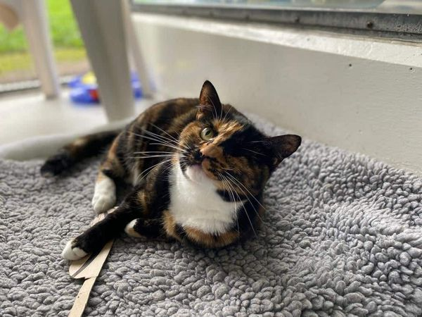 Cat makes 'miracle' recovery as she finds new home after being hit by bus