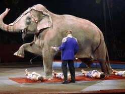 Powys latest council in region to ban wild animals in circuses