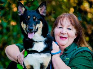 NORTH COPYRIGHT SHROPSHIRE STAR JAMIE RICKETTS 07/04/2015  pre-pic for pet rescue day informing people what is available in the area. This will be at the Quarry.  Picture taken at Grinshill Animal Rescue Centre in Shrewsbury.  In Picture: Jenny Martinez and Shaddow (7 month old Husky/Collie).