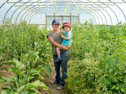 Small farms growing as interest in buying locally-produced veg jumps