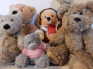 If you like cuddly bears, Shrewsbury Museum and Art Gallery have an exhibition for you