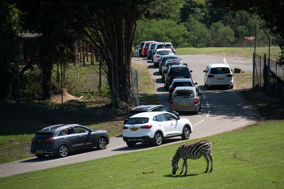Visitors make their way through West Midland Safari Park in Bewdley, as Britain is braced for a June heatwave as temperatures are set to climb into the mid-30s this week