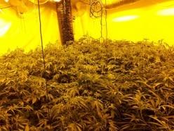 89 cannabis plants seized as police raid Telford drugs den