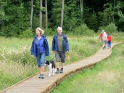 Treat for wildflower meadow fans as Colemere boardwalk is completed