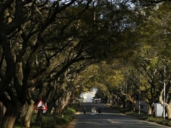 One of world's top urban forests threatened by tiny beetle