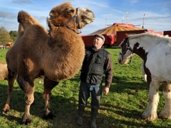 Arguments go on as circus animals arrive in Telford