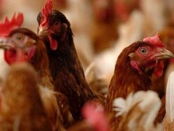 Plan for new broiler chicken facility