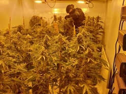 Large cannabis grow seized from Wem High Street