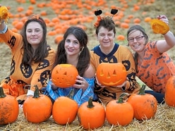 Pumpkins galore at Telford farm - with video