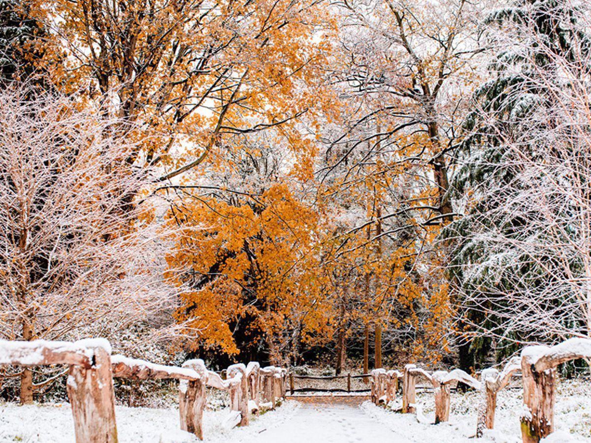 Snow in Apley Woods. Photo: Jamie Ricketts.
