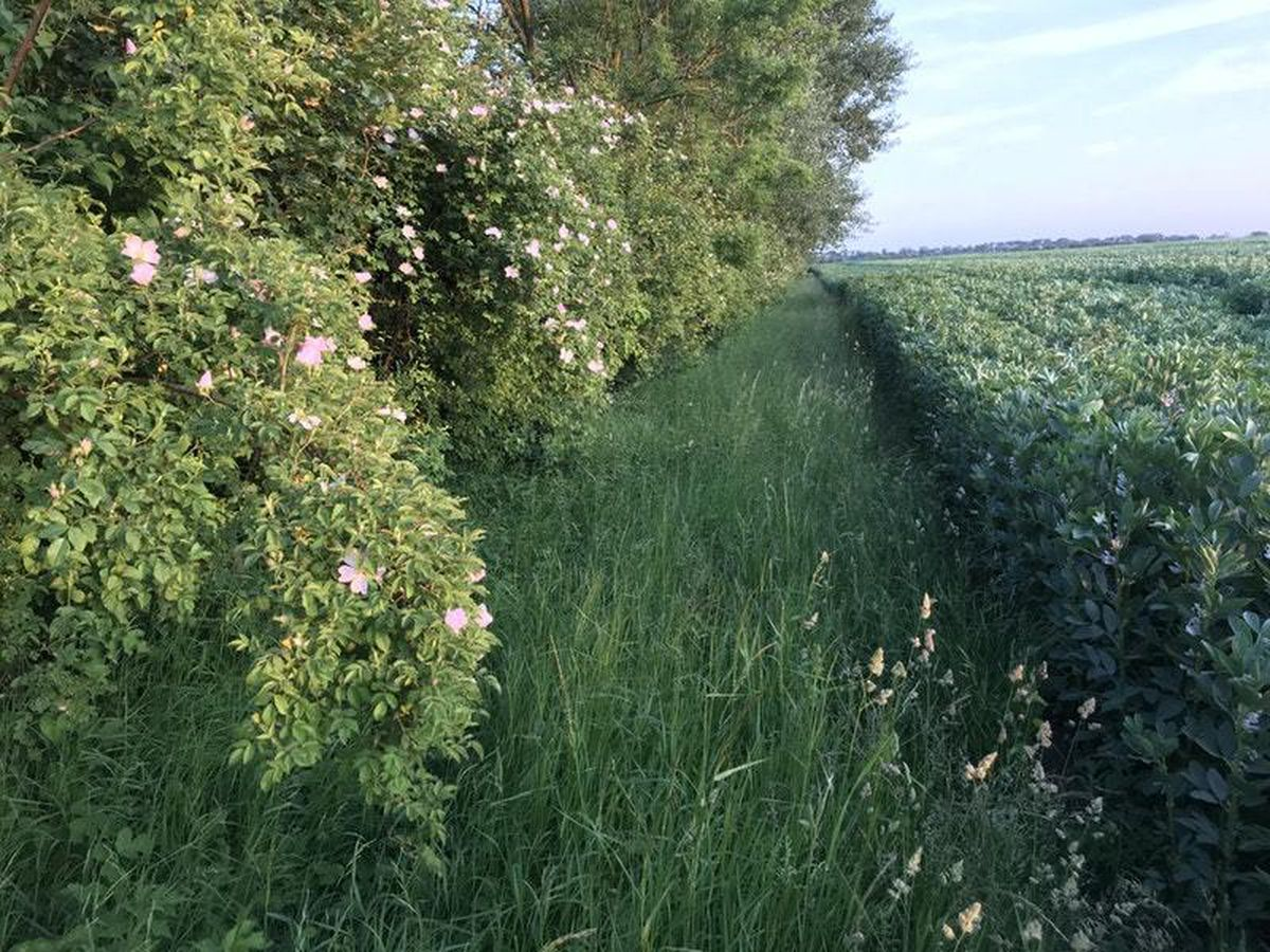 Farmland, as campaigners said careful changes to farming practices can help wildlife while the business continues to thrive