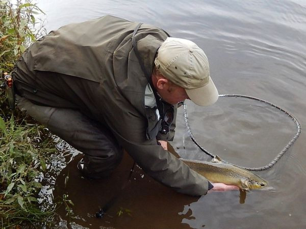Fishermen will no longer be able to keep salmon they catch in the River Severn