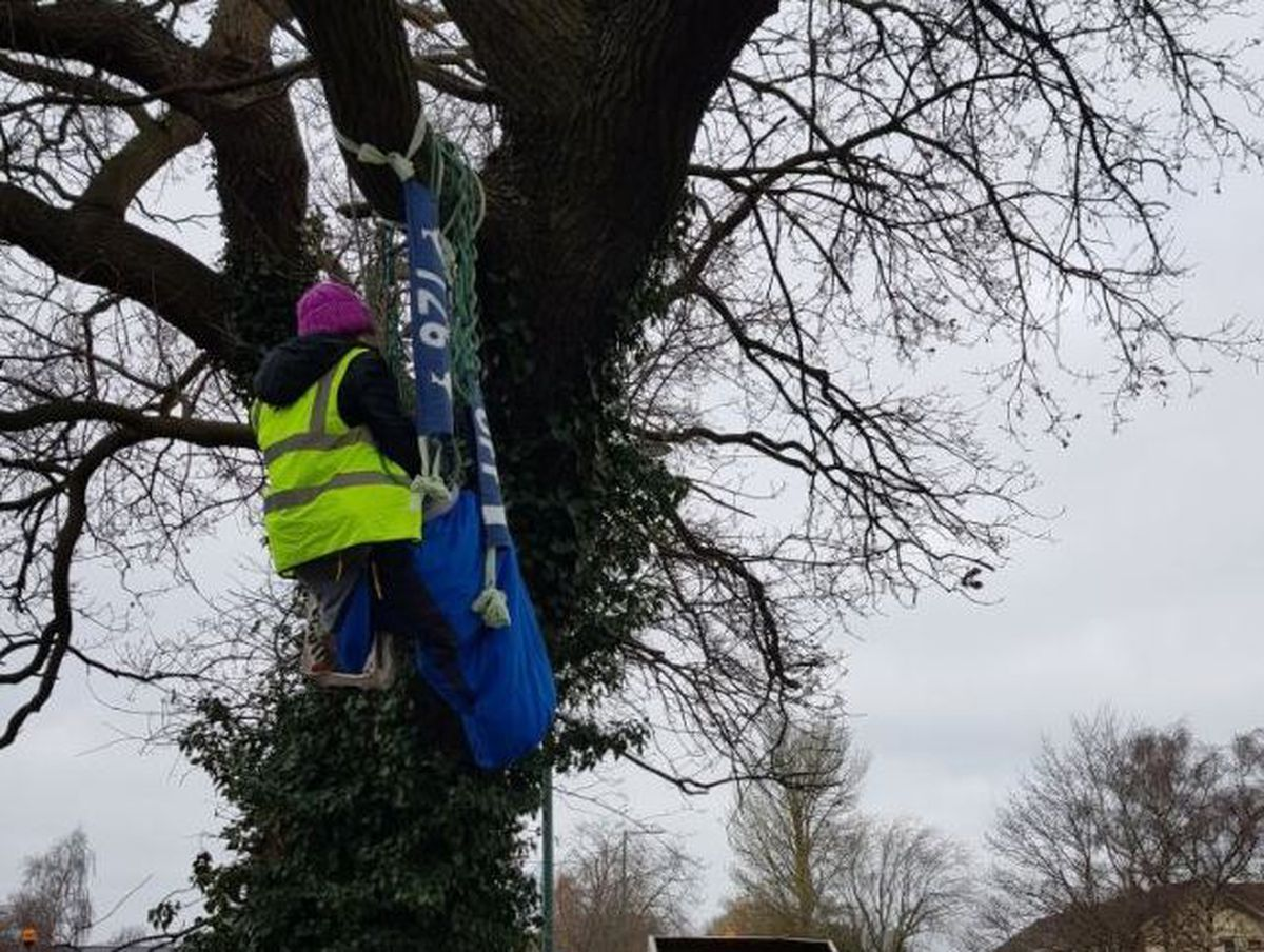 A protester sat in the tree in Featherbed Lane, Shrewsbury
