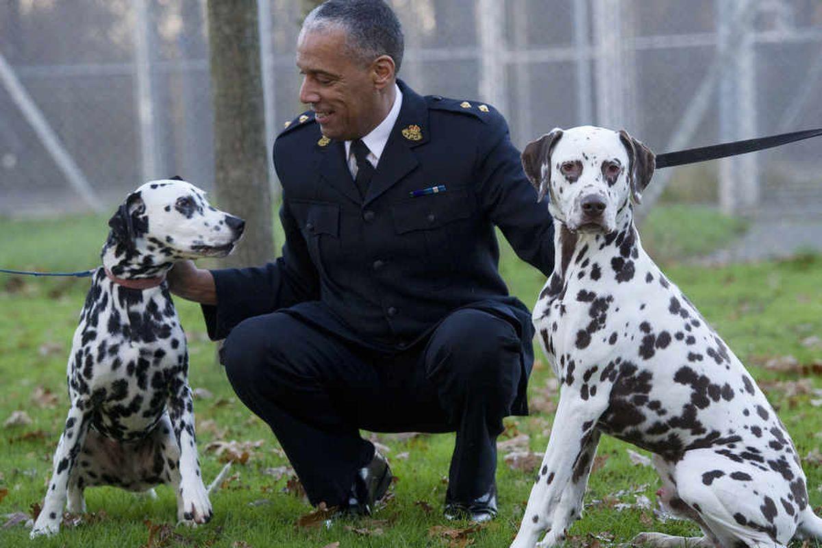 Telford couple escape jail over 'skeletal' Dalmatians