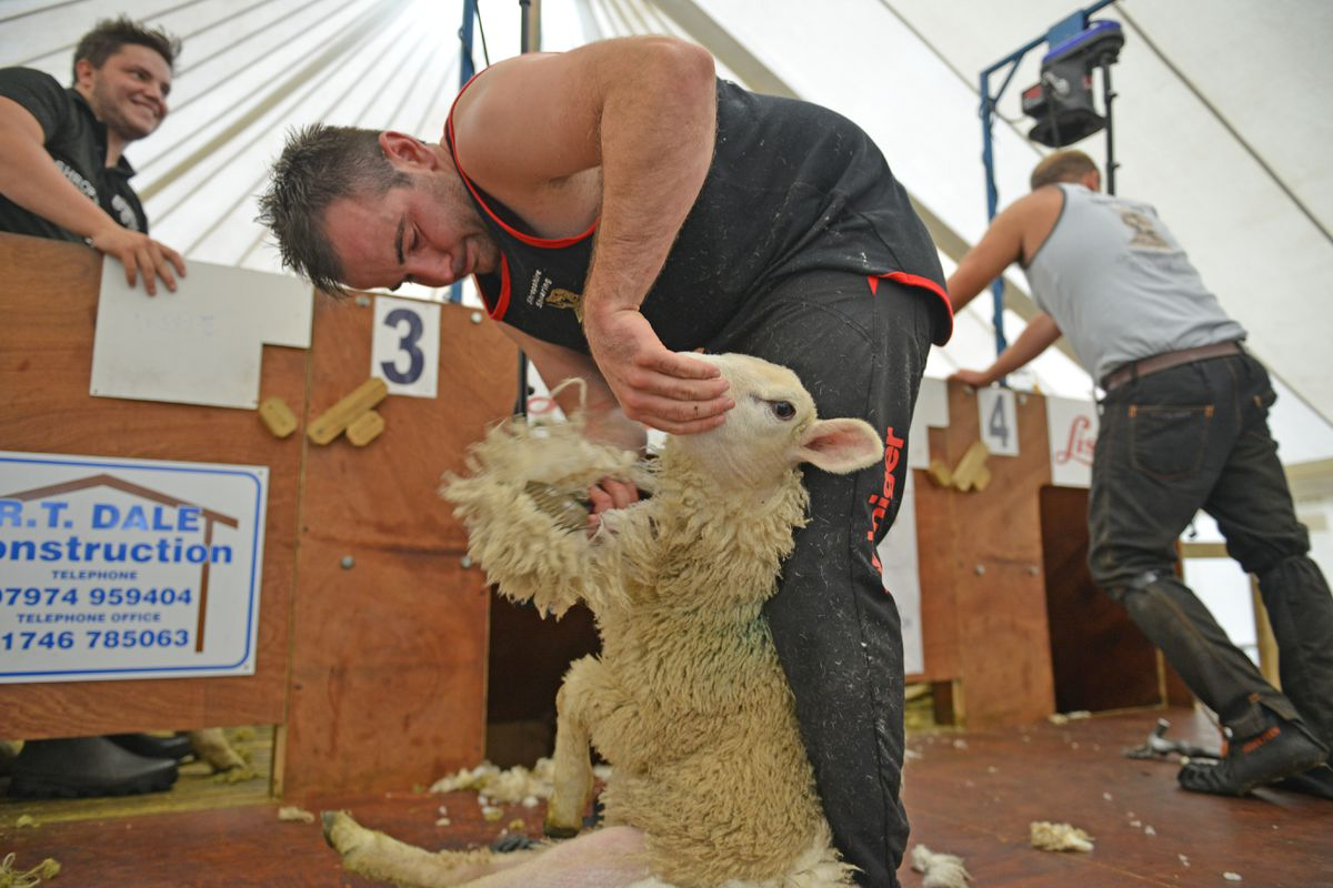 Robyn Hardman working hard during the Young Farmers' 24-hour shearing marathon