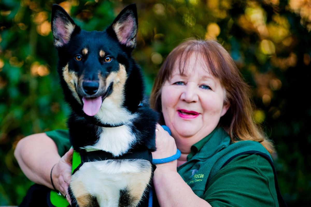 Jenny Martinez, from Grinshill Animal Rescue and husky/collie cross Shadow