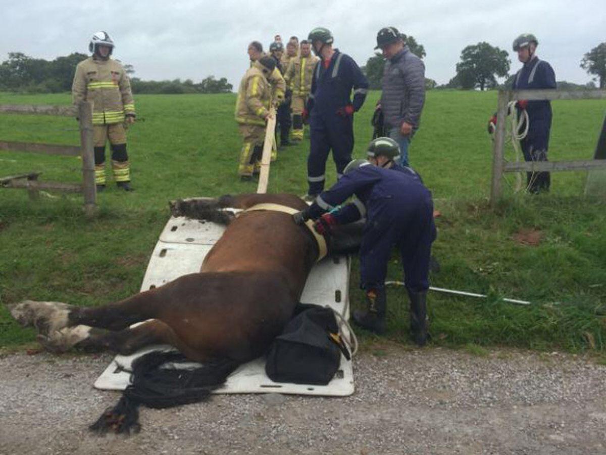 Fire crews rescue the horse. Photo: @SFRSWellington