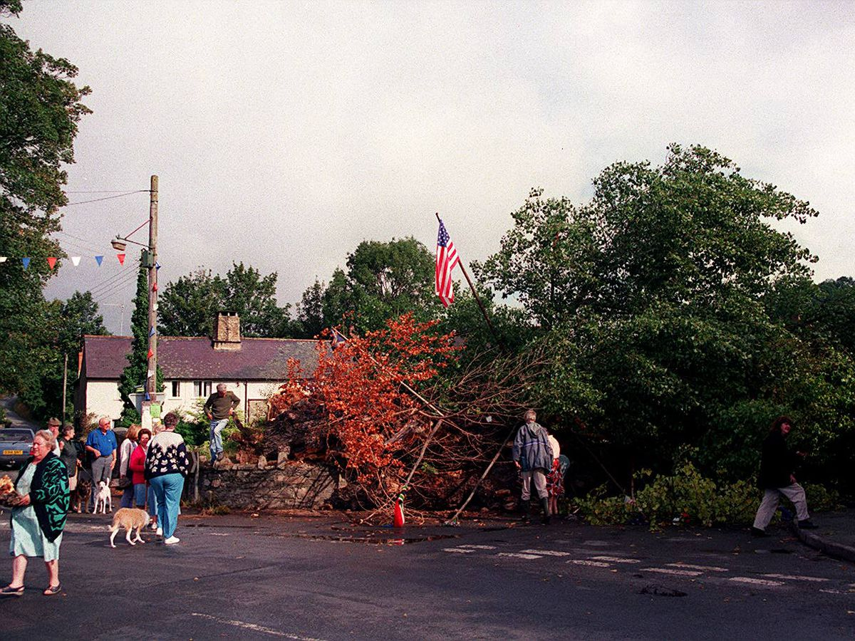 Shocked villagers take a close look at the fallen tree in September 1995.