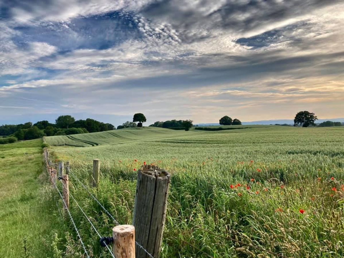 Many come to Shropshire for country walks