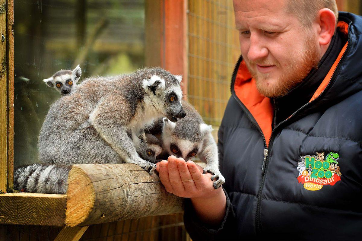 Ieuan Howells and lemurs at Hoo Farm