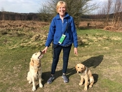 More than just a best friend: What it's like to be a puppy socialiser