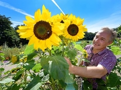 Nature bringing people together: Meet the community gardeners from Walsall