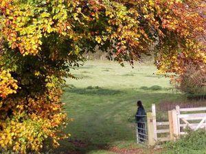 Stunning autumn scene near Trefonen