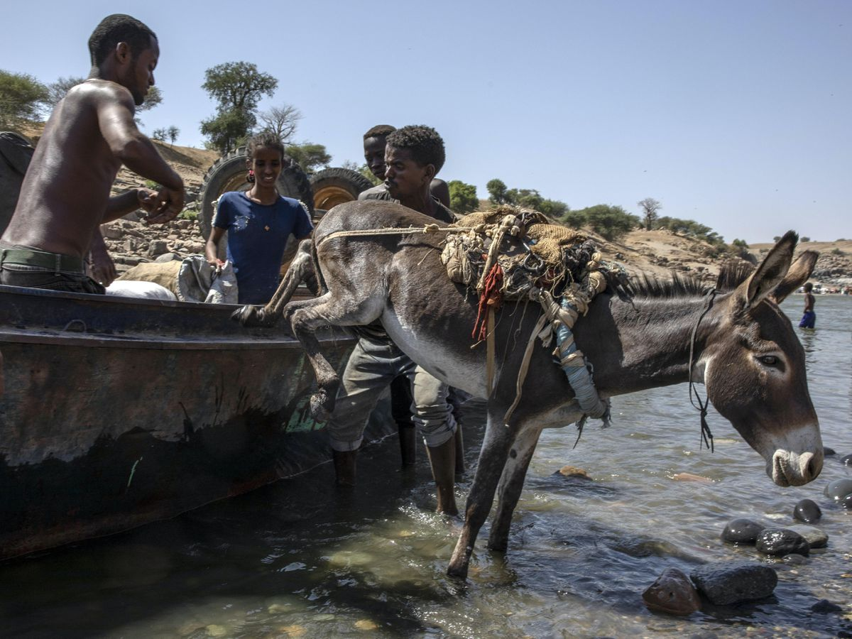 Tigray refugees who fled the conflict in the Ethiopia's Tigray arrive with their donkey