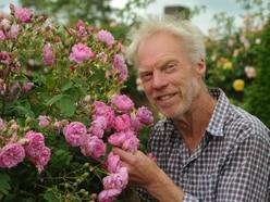Early summer blooms bring back memories of David Austin