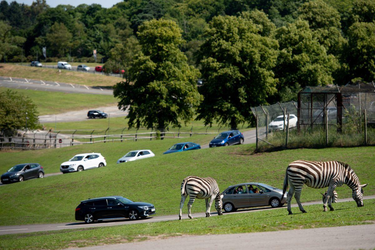 Visitors make their way through West Midland Safari Park