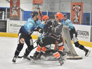 Tigers in action (Photo: Steve Brodie)